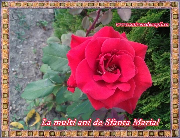 http://universdecopil.ro/images/stories/adolescenti/timp_liber/felicitari-de-Sfanta-Maria/felicitari%20de%20Sfanta%20Maria.jpg