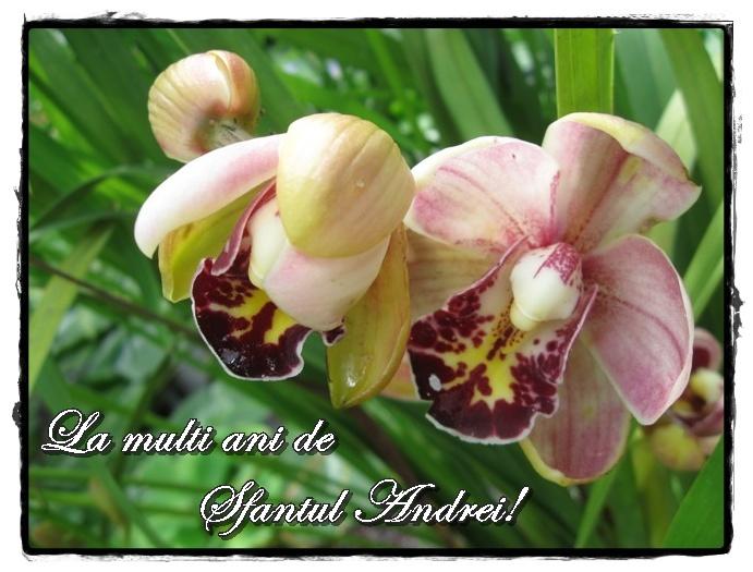 Mesaje si felicitari cu La multi ani de Sfantul Andrei
